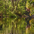 Silver Springs Nature Park Florida by Christine Till