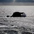 Silvery Ocean Sheen by Wernher Krutein