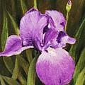 Single Iris by Anastasiya Malakhova