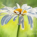 Single White Daisy Blossom by Sharon Freeman
