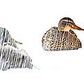 Sitting Ducks In A Blizzard by Bob Orsillo