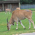 Six Flags Great Adventure - Animal Park - 121235 by DC Photographer