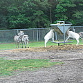 Six Flags Great Adventure - Animal Park - 121247 by DC Photographer