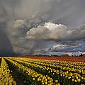 Skagit Valley Storm by Mike Reid