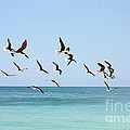Skimmers and Swimmers Print by Carol Groenen