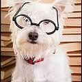Smart Doggie by Edward Fielding