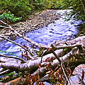 Smoky Mountain Stream Two by Frozen in Time Fine Art Photography