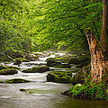 Smoky Mountains Solitude - Great Smoky Mountains National Park by Dave Allen