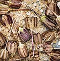 Snakes Head Fritillary Flower Seeds Pattern by Tim Gainey