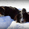 Snow Eaters by Patti Whitten