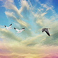 Snow Geese Over New Melle by Bill Tiepelman