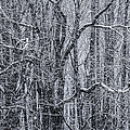 Snow In The Forest by Diane Diederich