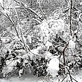 SNOW SCENE 4 Print by Patrick J Murphy