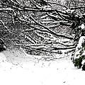 Snow Scene 5 by Patrick J Murphy