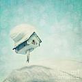 Snowbird's Home by Priska Wettstein