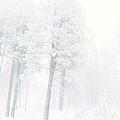 Snowed In by Tara Turner
