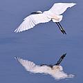 Snowy Egret In Flight by Robert Jensen