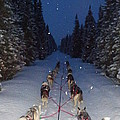 Snowy Night In The Pines by Karen  Ramstead