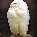 Snowy owl vintage  Print by Jane Rix