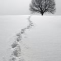 Snowy Path by Diane Diederich