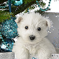 Snowy White Puppy Present by Greg Cuddiford