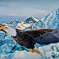 Soaring Bald Eagle by Gary Keesler