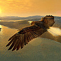 Soaring Eagle by Ray Downing