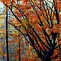 Song Of Autumn by Karen Wiles