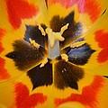 Soul Of A Tulip by Sonali Gangane