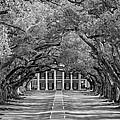 Southern Time Travel Bw by Steve Harrington