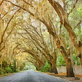Spanish Moss - Symbol Of The South by Christine Till