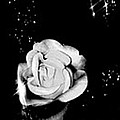 Sparkling Rose by Gayle Price Thomas