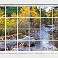 Special Place In The Woods Large White Picture Window View by James BO  Insogna