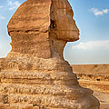 Sphinx Profile by Jane Rix