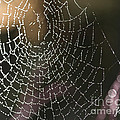 Spiderweb Green by Artist and Photographer Laura Wrede