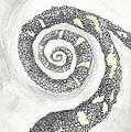 Spiral by Angela Pelfrey