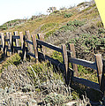 Split Rail Fence Yellow by Barbara Snyder
