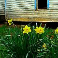 Spring At The Old Home Place by Julie Dant