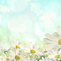 Spring Background With Daisies by Sandra Cunningham