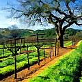 Spring In The Vineyard by Elaine Plesser