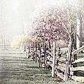 Spring landscape with fence Print by Elena Elisseeva