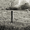 Spring Post And Bale In Black N White by Tracy Salava