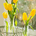 Spring Tulips by Amanda And Christopher Elwell