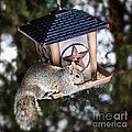 Squirrel On Bird Feeder by Elena Elisseeva