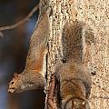 Squirrels by Eric Abernethy