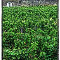 St. Emilion Winery by Joan  Minchak