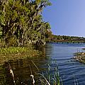 St Johns River Florida by Christine Till