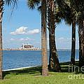 St Pete Pier Through Palm Trees by Carol Groenen