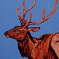 Stag by Patricia A Griffin