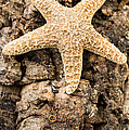 Starfish Print by Edward Fielding